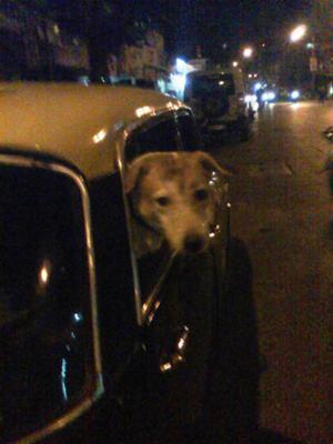 Samson Luvs To Travel By Cab